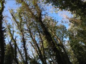 jobinatinnemans-woodpeckerstrees